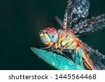 Stock photo showing of eyes dragonfly and wings detail beautiful dragonfly in the nature habitat 1445564468