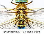 Stock photo showing of eyes dragonfly and wings detail beautiful dragonfly in the nature habitat 1445564495