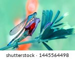 Stock photo showing of eyes dragonfly and wings detail beautiful dragonfly in the nature habitat 1445564498