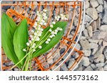 lilies of the valley and rusty... | Shutterstock . vector #1445573162