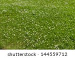 clover green flower field as background - stock photo