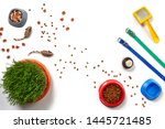 Stock photo flat lay composition with accessories for a cat isolated on white background pet care 1445721485