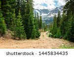 Colorado Trail Among The Pine...