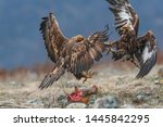 Hungry eagles are fighting for prey.
