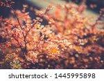 Close Up Image Of Orange Autumn ...