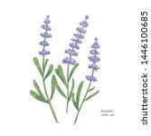 elegant botanical drawing of... | Shutterstock .eps vector #1446100685