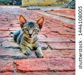 Stock photo shot of a tabby kitten sitting down on a brick floor the kitten s ears are raised and is alert 1446108005