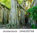 close up view of intertwined... | Shutterstock . vector #1446350768