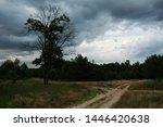 semi dry tree at a crossroads...   Shutterstock . vector #1446420638