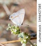 Butterfly On Flower White Orange