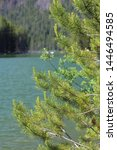 Pine tree picture along Lemolo Lake