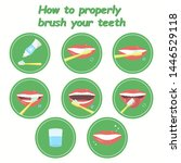 how to property brush your... | Shutterstock . vector #1446529118