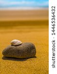 A Single Shell Sits On A Large...