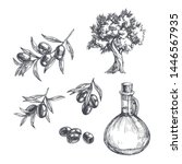 vector vintage olive set...   Shutterstock .eps vector #1446567935