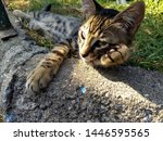 Stock photo resting kitten puts paw on her cheek kitten thinks and daydreams 1446595565