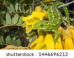 The Jewelled Gecko Is One Of...