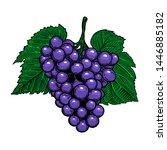 grape branch on white...   Shutterstock .eps vector #1446885182