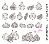 ripe figs hand drawn vector... | Shutterstock .eps vector #1446953495