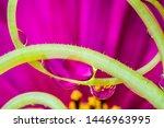 dewy flower in the detail  ...   Shutterstock . vector #1446963995
