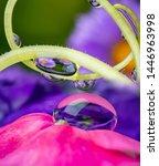 dewy flower in the detail  ...   Shutterstock . vector #1446963998