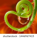 water drop on a flower   macro...   Shutterstock . vector #1446967415