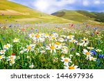 Field Of Daisies And Other Wil...