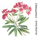 Rhododendron Flower Watercolor...