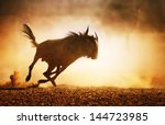 blue wildebeest running in dust ... | Shutterstock . vector #144723985