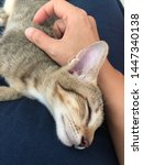 Stock photo peaceful sleeping kitten with owner 1447340138