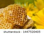 Yellow honeycomb slice. honey...