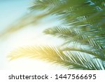 Palm Leaves Against Blue Sky At ...