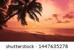 Summer Sun Sundown On Palms...
