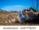 weimaraner wearing a fleece... | Shutterstock . vector #1447778225