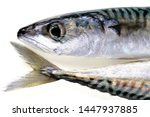 Stock photo head and tail of fresh mackerel close up on white background 1447937885