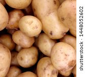 macro photo food root vegetable ... | Shutterstock . vector #1448052602