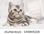 Tabby Cat On The White Carpet...