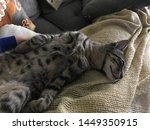 Stock photo tabby kitten and tuxedo kitten months old 1449350915