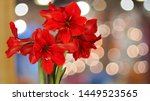 Red Amaryllis Flowers With...