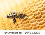 Working Bee On Honeycomb