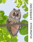 close up of owl sitting on... | Shutterstock . vector #1449832382