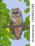 close up of owl sleeping on... | Shutterstock . vector #1449832385