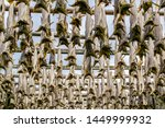 North atlantic cod dries on racks in the Lofoten Islands in late spring. Known as stockfish, the preserved cod is the primary ingredient in bacalao, a fish stew popular in Norway and Spain.