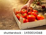 Tomatoes In A Wooden Box Close...