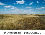 Steppe Landscape. Lonely Green...