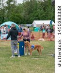 Small photo of Wachtebeke, Belgium, 13 July 2019. Hachiko. Assistance dogs are trained to assist people with a disability or condition.