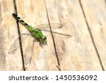 Stock photo closeup of a green snaketail dragonfly on a sun drenched piece of wood the colorful insect is also 1450536092