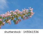 Azalea flower against blue sky - stock photo