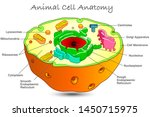 animal cell anatomy. annotated... | Shutterstock .eps vector #1450715975