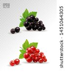 isolated currant set. black and ...   Shutterstock .eps vector #1451064305