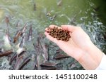 Feeding Fish Concept. Organic...